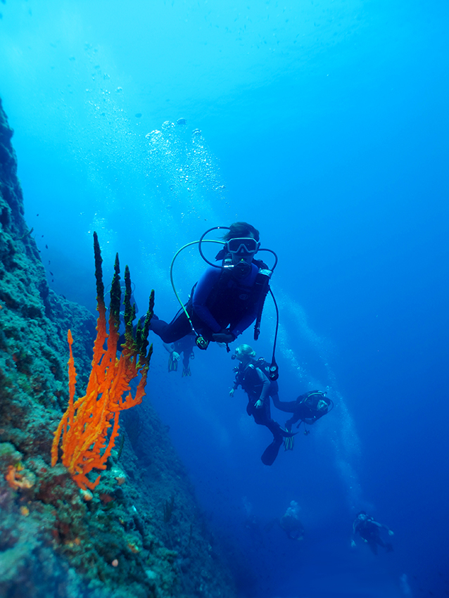 Homepage Diving Excursions