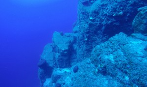 Diving Snorkeling Excursions